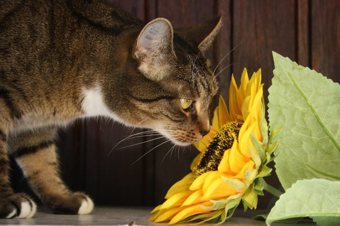 8 Tips and Tricks to Keep Cats Out of Houseplants