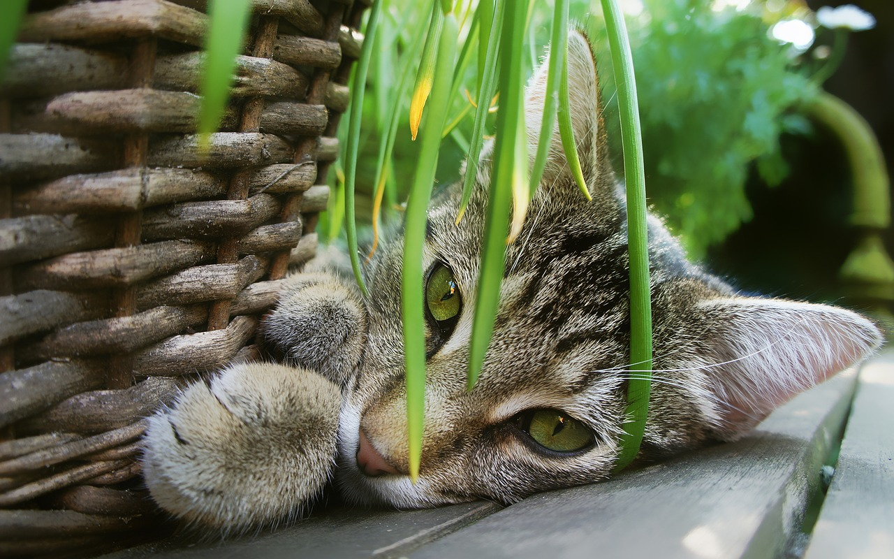 cat playing plants