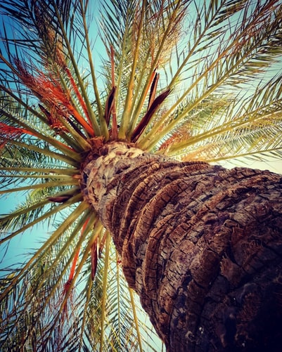 green and brown palm tree