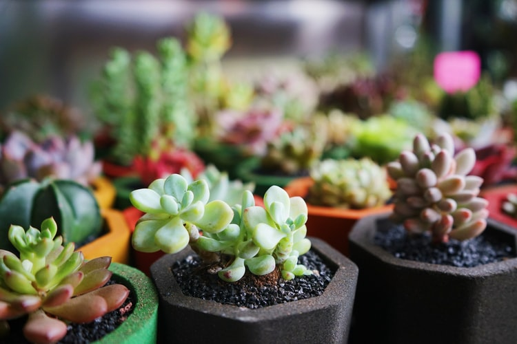 green and brown succulent plants