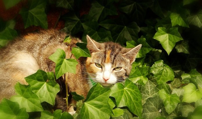 Cat sitting on the field surrounded by plants