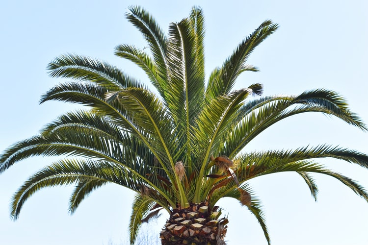 sago palm during day time